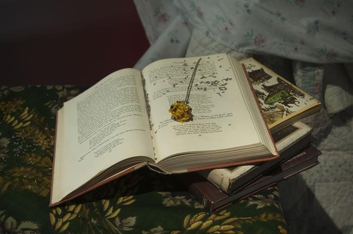 pixley-young-alice-4nightfall-with-books-.jpg
