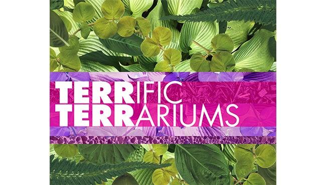 webslide_FC_terrific terrariums.jpg